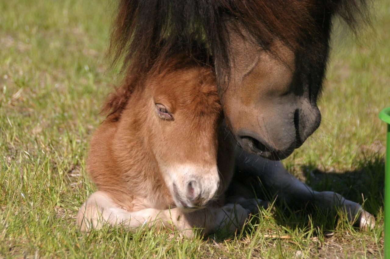 Unser kleiner Kalani ist geboren!!